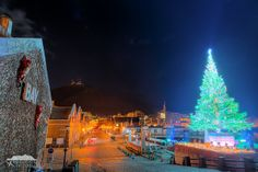 Tree floating in the sea of Hakodate Christmas Fantasy. https://www.facebook.com/hakodatepictorial