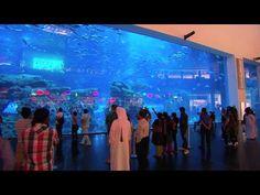 Dubai Aquarium Huge Marine Reef Tank
