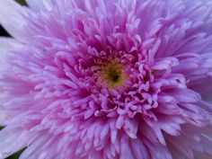 PinkPinky - Some litlle pink flower i just found.