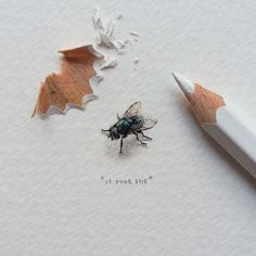 Day 36/100 (9/25 #freefridays) : Life-sized fly.  12 x 12 mm. THIS PAINTING WILL BE UP FOR AUCTION FOR A WEEK STARTING 24 JUNE 2015. #potluck100pfa #miniature #watercolor #paintingsforants #fly (at Buchanan Studios)