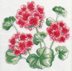 Geranium Sketch