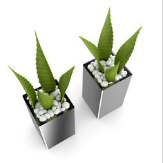 CGAxis 3D Double Aloe Plant Only on CGAxis FREE you can get this hiqh quality 3D Double Aloe Plant Free model.