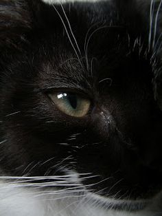 Chwile...: moje koty