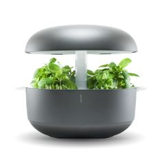 Automated mini herb garden