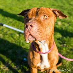 Brisco! #adoptable at CACC in #Chicago 27th and Western