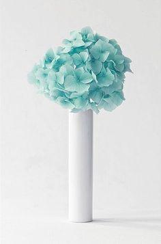 A Tiffany Blue Hydrangea. Turquoise Flowers, Shades Of Turquoise, Turquoise Color, Aqua Blue, Shades Of Blue, Blue Flowers, Mint Green, Pale Pink, Pink Roses