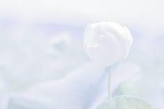 """Yukihiro Yukihiro : """"white moments"""" http://digianalogue.com/photoblog/archives/2013/08/white_moments.php #photography #YukihiroYoshida"""