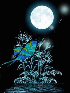 Animated Butterflies GIF: Butterflies GIF 1