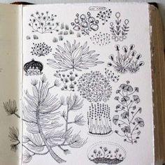 Becca Stadtlander - Sketchbook
