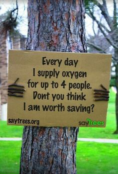 Sprüche/Motivation Trees help to slow climate change. They also improve air quality in urban areas. Don& cut down trees for a new home or for yet. Save Our Earth, Save The Planet, Our Planet, Save Mother Earth, Save Planet Earth, Our World, Salve A Terra, Go Green, Mother Nature