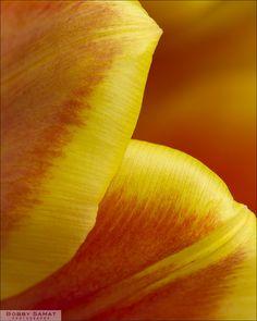 tulip...My sisters favorite flower :)