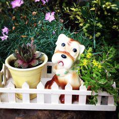 Succulents in vintage planters