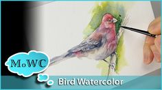 Bird painting (or any painting) can benefit from the soft blended foundation of wet in wet watercolor technique. Wet in wet does not need to be reserved for ...