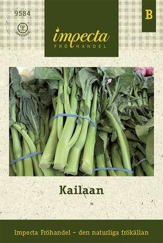KAILAAN, chinese kale