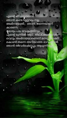 1537 Best Malayalam quotes images in 2019 | Malayalam quotes