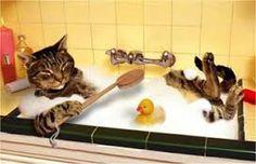 Afbeeldingsresultaat voor katten