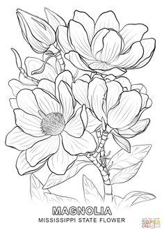 mississippi-state-flower-coloring-page-mississippi-state-flower.jpg (1020×1440)