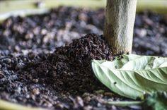 borra café plantas