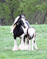 Mare and Her Colt :)