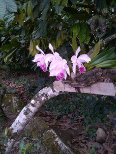 Tomada en la Hojarasca, Neiva, Huila. Plants, Colombia, Naturaleza, Scenery, Flowers, Plant, Planets