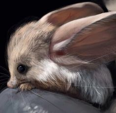 Long Eared Jerboa.  This little animal is a cross between a mouse and a rabbit, and it is totally adorable.
