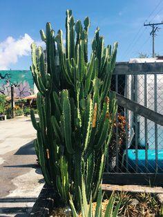 Florida miami cactus garden wallpaper 🌵