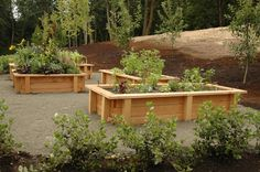 use cedar treated wood with a light stain to make raised planter boxes