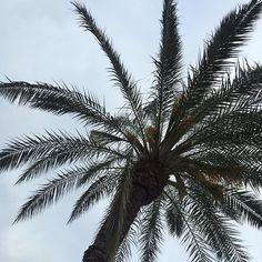 #palm #palmera #nofilter