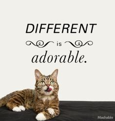 Different IS adorable! Lil Bub is here to bring the cheer. The Internets cutest cat has 15 things that are guaranteed to make your day a little bit brighter. #lilbub