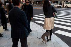 """""""Curious Dog in Ginza"""" by Inaki Lizarraga de Miguel"""