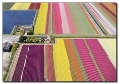 Holland tulip field!    from http://i.crackedcdn.com/phpimages/article/5/0/8/85508_v1.jpg