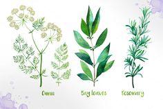 Watercolor Herbs by AlexGreenArt on @creativemarket