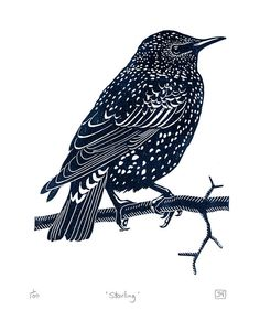 Starling - linocut print - James Green, U.K.