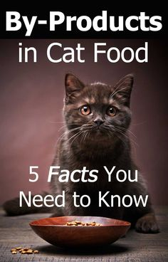 Smart owners read the labels before feeding a new kind of food to their cats. - Kit Cat Club:adoption,health,diy,and more - Cute cat Healthy Cat Food, Best Cat Food, Dry Cat Food, Pet Food, I Love Cats, Cool Cats, Homemade Cat Food, Cat Diet, Cat In Heat