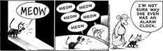 Mutts Comics, Cat Comics, Funny Comics, Humane Society, Pet Toys, Comic Strips, Alarm Clock, Animal Rescue, Cute Animals