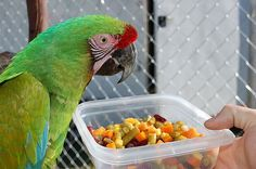 Some good ideas and tips for a healthy parrot diet