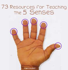 73 resources and activities for teaching the 5 senses list #preschool #children