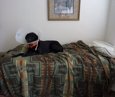 """Chapter 37 - The Book of Barkley - """"It's All Fun and Games Until Someone Ends Up in a Cone""""."""