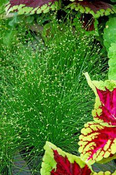 fiber optic grass......always have one