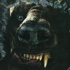 The Hobbit: Desolation of Smaug Photo Reveals Beorn in Bear Form! -- Mikael Persbrandt plays this shape-shifter who lives between the Misty Mountains and Mirkwood. -- http://wtch.it/wFc8x