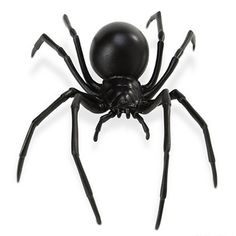 Okay, this is creepy. However, kids and adults alike enjoy some creepy every now and then! Black Widow are perhaps the most famous of spiders, right alongside of the tarantula. Black Widow enjoy the b