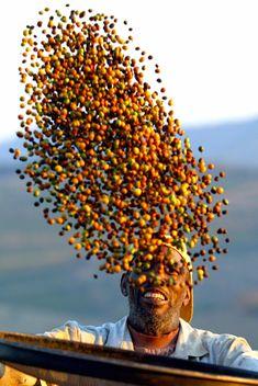 Le café, de la traite des Noirs au commerce équitable