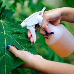 This Amazing Natural Pesticide Recipe Is So Effective You Can Get Rid Of Pests In No Time How to Attract Frogs andOrganic spray against ScGet Rid of Animal Pests W Garden Bugs, Garden Insects, Diy Garden, Garden Pests, Garden Care, Garden Web, Balcony Garden, Garden Projects, Garden Ideas