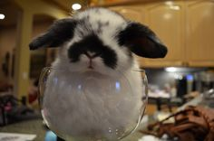 """""""Waiter, there's a hare in my wine glass!"""""""