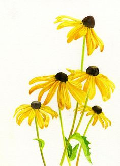 Watercolor Flowers Discover Yellow Black Eyed Susans by Sharon Freeman black eyed susan prints Watercolor Paintings For Beginners, Watercolor Artists, Watercolor Cards, Watercolor Landscape, Watercolor Flowers, Simple Paintings, Watercolour Painting, Mellow Yellow, Yellow Black