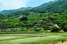 Farmers in Hadong, South Korea(하동군)