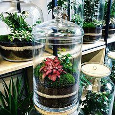 Zdjęcie numer 1 w galerii - Brakuje ci zieleni w mieście? Spraw sobie las w słoiku Closed Terrarium Plants, Build A Terrarium, Mini Terrarium, Garden Terrarium, Bonsai Garden, Bottle Garden, Glass Garden, Ideas Florero, Planting Succulents