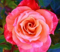 Rose Painting | rose_Painting.jpg