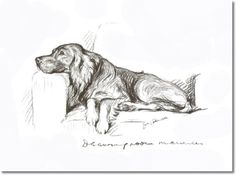 Lucy Dawson - Book Plate From Dogs Rough and Smooth by Lucy Dawson - Lucy Dawson English Setter Drawing Room Manners Painting Animal Drawings, Dog Drawings, Dog Portraits, Portrait Art, Famous Artwork, Drawing For Beginners, Vintage Dog, Poster Prints, Art Prints