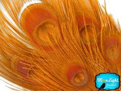 Bleached and Dyed Peacock Tail Feathers; Orange Peacock Feathers; 5 Pieces Per Pack by Moonlight Feather. $5.23. These are top quality natural feathers that have been bleached and dyed.. Order by 1pm PST M-F for same day shipment. 30 days money back on unopened products.. Perfect for Jelwelry, Millinery and fashion use. These are dyed natural feathers so each is unique.. 5 Feathers per pack. 8-10 Inches Long.. Our Orange color bleached and dyed peacock tail feat...